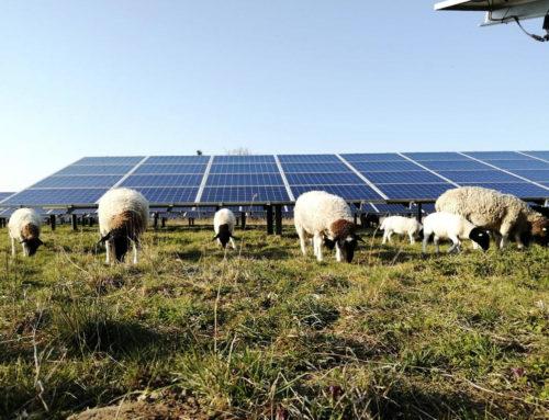 Frühlingsanfang im Solarpark Leizen